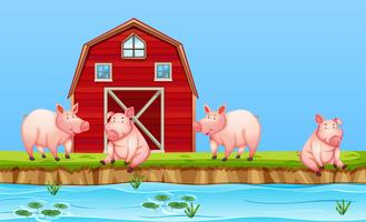 Pigs at the farm