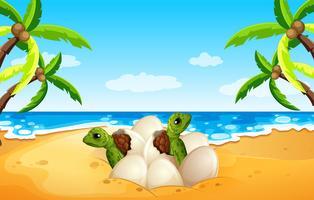 Baby sea turtle hatch on the beach