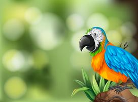 Colorful parrot background scene