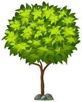 Getrennter Baum auf weißem Hintergrund
