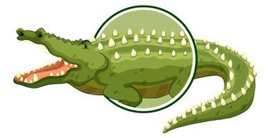 Un autocollant de crocodile sur fond blanc