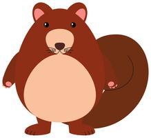Esquilo com pêlo castanho