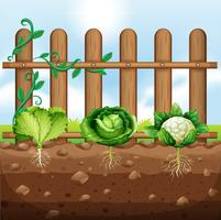 Set of vegetable crops