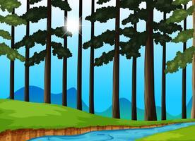 Árvores e rio na floresta