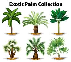 Different types of exotic palm trees vector