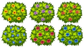 Green bush with colorful flowers vector