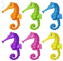 Hippocampes en six couleurs