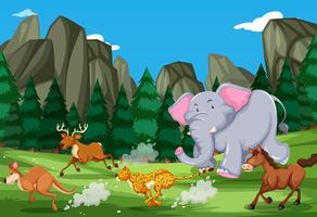 Los animales corren en la naturaleza.