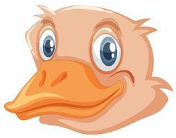Una cara de avestruz vector