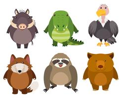 Wild animals on white background