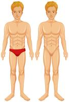 Ein Vektor des menschlichen Körpers
