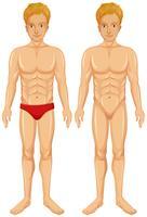 Un vecteur de corps humain