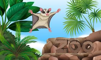Sugar glider flying over the zoo sign
