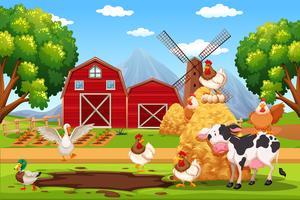 Animal en la granja
