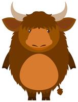 Cute yak on white background