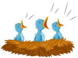 Tres pajaritos en nido