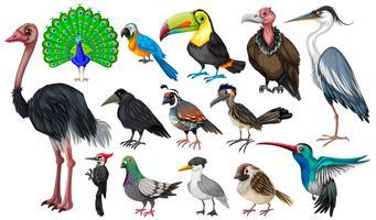 Set of wild birds