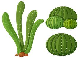 Three types of cactus plants