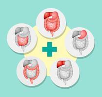 Diagrama que muestra diferentes órganos en humanos