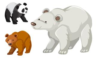 En typ av björnuppsättning