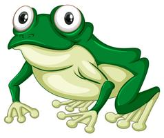 Green frog on white backgound vector