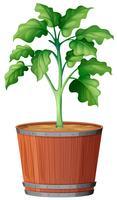 Planter le pot