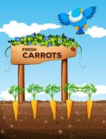 Farm with fresh carrots and sign