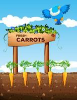 Ferme aux carottes fraîches et signe