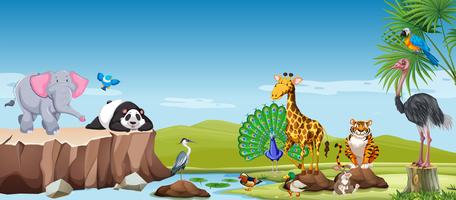 Animales salvajes en el campo