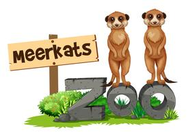 Two meerkats by the zoo sign vector