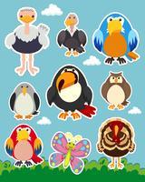 Klistermärke med olika typer av fåglar