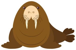 Sea lion on white background