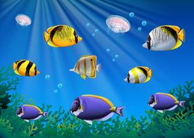 Scene with colorful fish swimming underwater