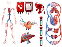 Blood types and breathing system vector