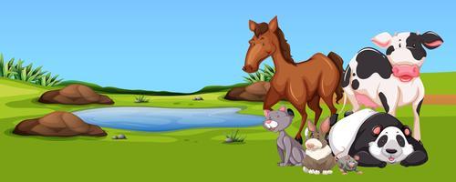 Många djur vid dammen