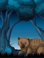 Ein Quokka im dunklen Wald