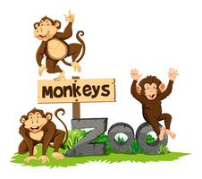 Three monkeys in the zoo