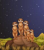 Meerkats die zich op rotsen bij nacht bevinden
