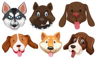 Set of dog breeds head vector