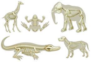 Esqueletos de animales