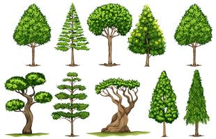 Different types of trees