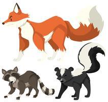 Trois types d'animaux sauvages sur blanc