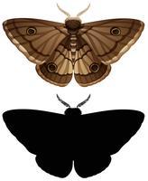 Conjunto de mariposa e silhueta de cor