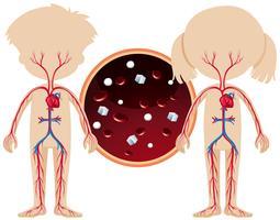 Ein Junge und ein Mädchen Anatomie
