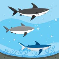 Diferentes tubarões nadando debaixo d'água
