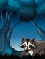 Raton laveur dans la forêt sauvage