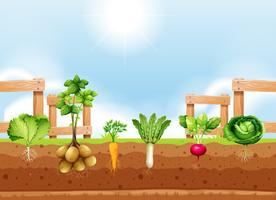 Set of different vegetable crop