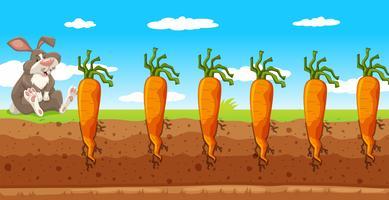 Um coelho na fazenda de cenoura
