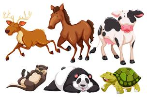 Los animales vector