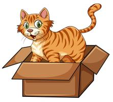 A cat in the box vector